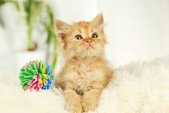 Redhead kitten on white plaid Royalty Free Stock Photo