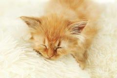 Redhead kitten on white plaid. Royalty Free Stock Photo