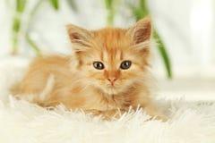 Redhead kitten on white plaid. Royalty Free Stock Photos