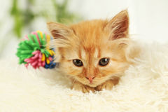 Redhead kitten on white plaid. Royalty Free Stock Photography