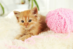 Redhead kitten on white plaid, close up Stock Photos