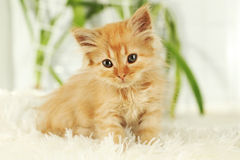 Redhead kitten on white plaid, close up Stock Images