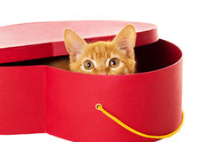 Redhead kitty sits in a box Royalty Free Stock Photo