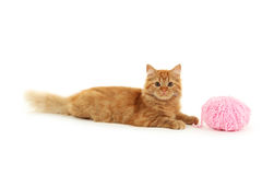 Redhead long hair kitten with ball isolated on a white Royalty Free Stock Photos
