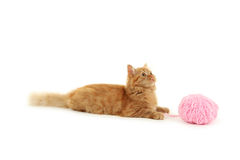 Redhead long hair kitten with ball isolated on a white Stock Image