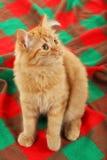 Redhead long hair kitten on warm plaid, close up Royalty Free Stock Photos