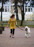 Redhead Walks Dog. Redhead caucasian female, aged 24, walks her Goldendoodle dog (part Golden Retriever, part Poodle) on an autumn afternoon in a New England stock photo