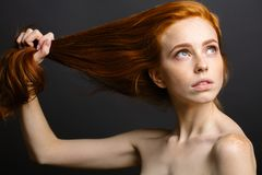 Redhead woman holding her healthy and shiny hair, studio grey. Redhead woman with strong healthy hair portrait. ginger girl shows natural hair strength Royalty Free Stock Image