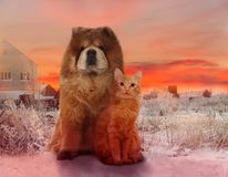 Redheaded dog and red cat on a winter sunset