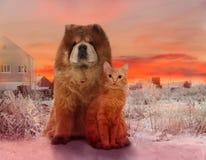Redheaded hund och röd katt på en vintersolnedgång arkivbilder