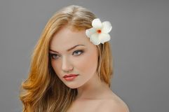 Redheaded picture of beauty Stock Photos