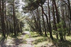 RediÄ£Ä «τ οι συστροφές πορειών Στοκ Εικόνες