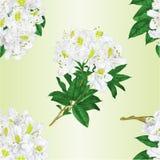 Redigerbar illustration för sömlös för texturfilial för vita blommor för rhododendron vektor för tappning Royaltyfri Foto