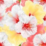 Redigerbar illustration för vektor för tappning för vita rosa färger för sömlös textur och bakgrund för hibiskus för tropisk växt stock illustrationer
