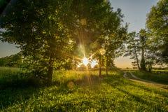 redigerbara för eps för jpgsolnedgång fullt trees Arkivfoton