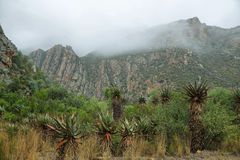Redish mountains and cactus in Seweweekspoort pass Stock Photos