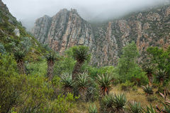 Redish mountains and cactus in Seweweekspoort pass Stock Images