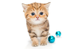 Redkitten and toys blue color Royalty Free Stock Photo