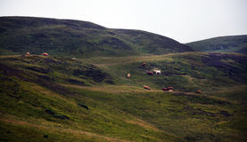 Średniogórze krajobraz z krowami zdjęcie stock