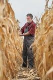 Średniorolna egzamininuje kukurydzana uprawa w polu Zdjęcia Stock