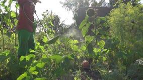 Średniorolna kowbojska mężczyzna opryskiwania bania w gospodarstwie rolnym chemiczny traktowanie zbliżenie 4K zbiory