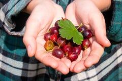 Średniorolni mienie agresty na palmach Zdjęcie Royalty Free