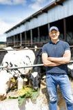?redniorolny dzia?anie na gospodarstwie rolnym z nabia? krowami zdjęcia stock