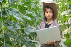 ?redniorolny kontroluje melon na drzewie Poj?cia podtrzymywalny utrzymanie, plenerowa praca, kontakt z natur?, obrazy stock