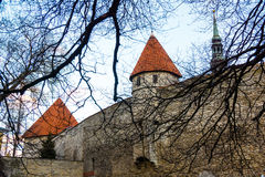 Średniowieczna ściana i wierza w starym Tallinn mieście Fotografia Royalty Free