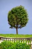 Redondo-corte el árbol Foto de archivo