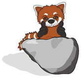 Redpanda and large stone Royalty Free Stock Images