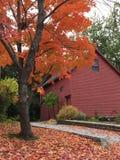 Reds av hösten Arkivfoto