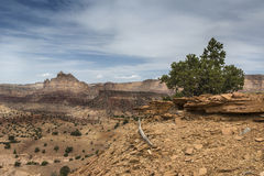 Reds Canyon in the San Rafael Swell Royalty Free Stock Photography