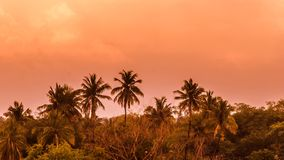 Redsky scenery. Beautiful evening time landscape palm trees nature silhouette Royalty Free Stock Images