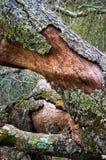Reduza a árvore na floresta imagem de stock royalty free