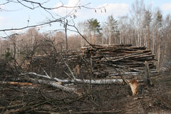 Reduza árvores na floresta Fotografia de Stock