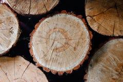 Reduza uma árvore Imagem de Stock Royalty Free