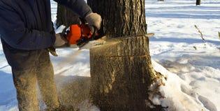 Reduzca el árbol con una motosierra Imagen de archivo
