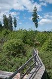 Reduzca el bosque después de Kyrill, pieza de la trayectoria Trecking en las colinas alemanas de Rothaar de las montañas Fotos de archivo libres de regalías
