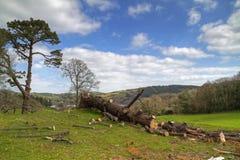 Reduzca el paisaje del bosque Fotografía de archivo libre de regalías