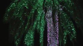 Reduzca la inclinación de la palmera con la iluminación en la noche almacen de metraje de vídeo