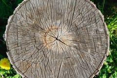 Reduzca la vieja opinión superior del tronco de árbol Imagen de archivo libre de regalías