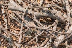 Reduzca los árboles - efectos de los bosques de la destrucción, calentamiento del planeta, fotografía de archivo libre de regalías
