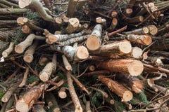 Reduzindo árvores Fotografia de Stock Royalty Free