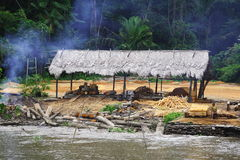 Reduzindo a floresta tropical Foto de Stock Royalty Free