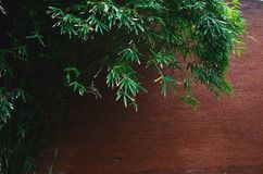 Redwall bamboo pictorial photography Little King. Eastphoto, tukuchina, Redwall bamboo pictorial photography Little King Stock Images