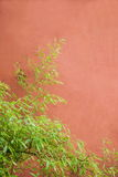 Redwall-Bambus Lizenzfreie Stockbilder