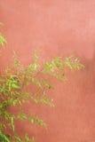 Redwall-Bambus Stockbild