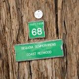 redwood δέντρο σημαδιών Στοκ εικόνα με δικαίωμα ελεύθερης χρήσης