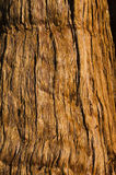 Redwood Stock Image